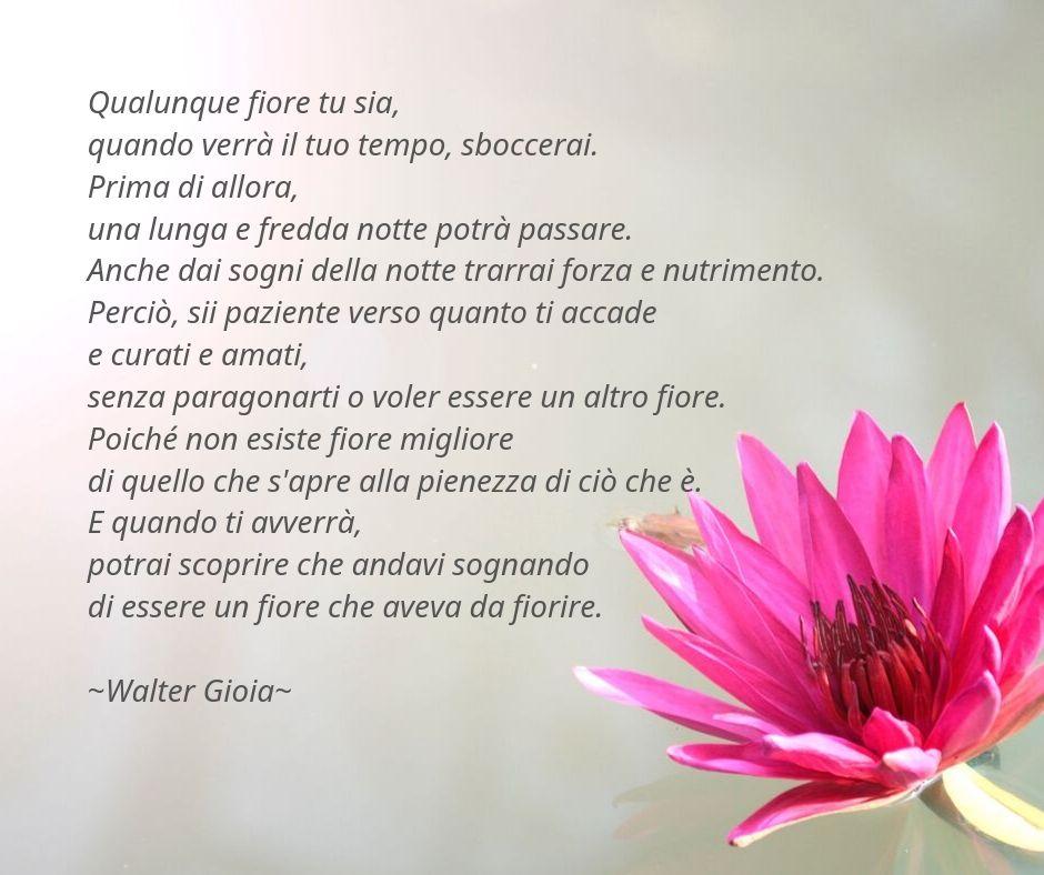 Walter Gioia #001